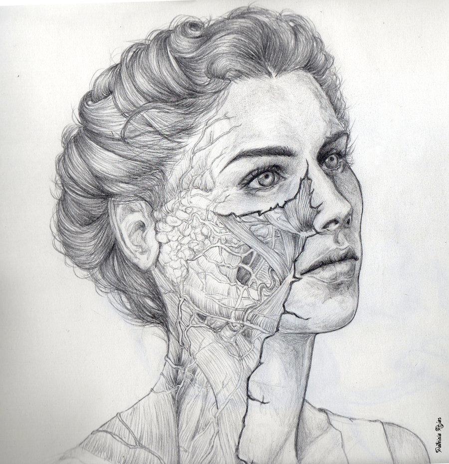 Anatomy_245775.jpg