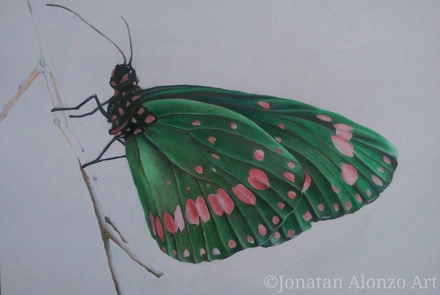 Preview__5___Butterfly_by_Jonatan_Alonzo_Art_265970.jpg