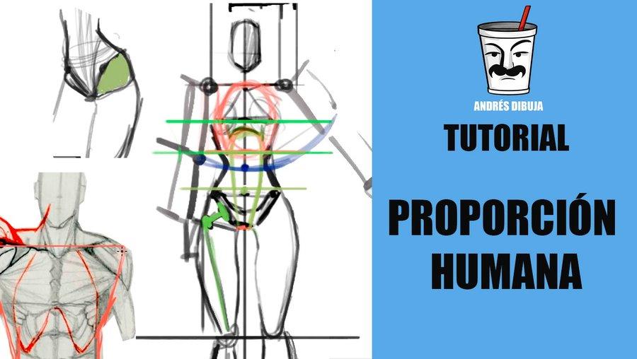 Anatomía - Tutoriales - Más populares | Dibujando
