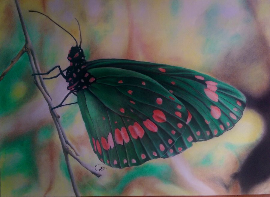35._Butterfly_by_Jonatan_Alonzo_Art.jpg_269350.jpg