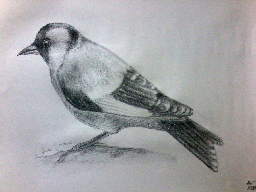 black_bird_251887.jpg