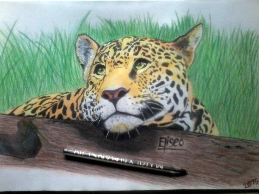 Leopardo_6_253055.jpg