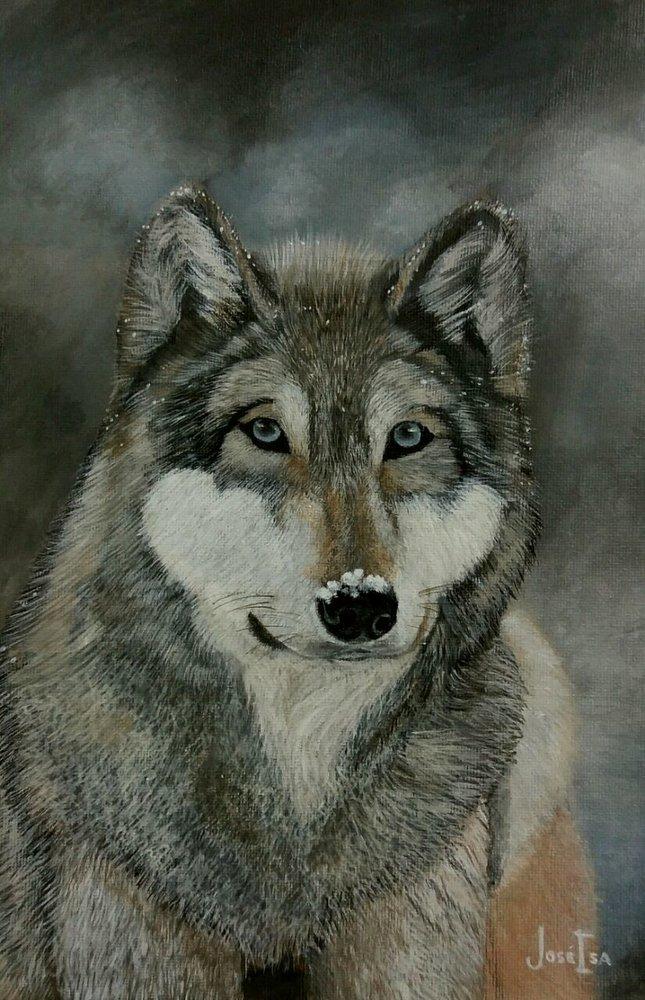 Lobo_293106.jpg