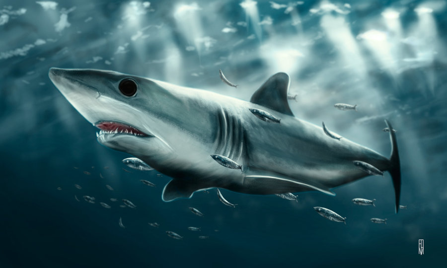 tiburon_293112.jpg