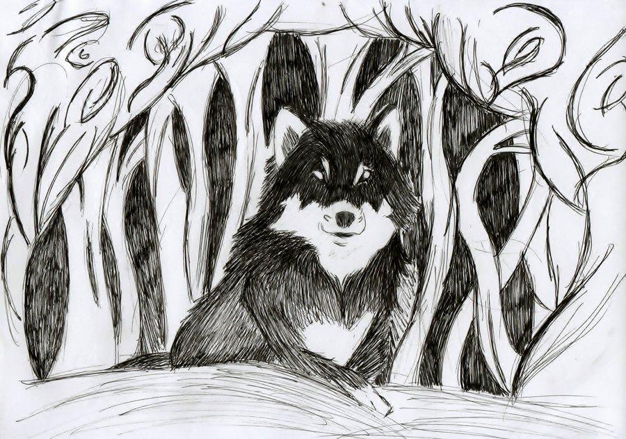 wolf_257936.jpeg