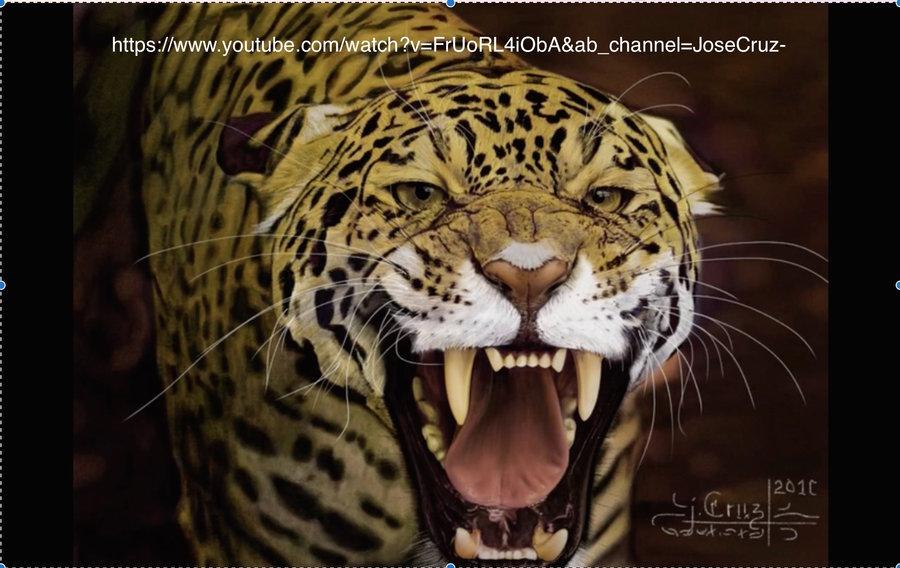 Jaguar_YouTube_260112.jpg