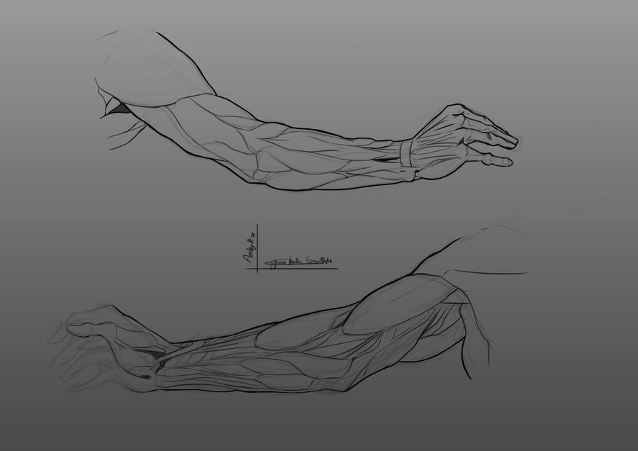 anatomical_landmarks___arms_by_ambylise_d7ns1k9_262051.png
