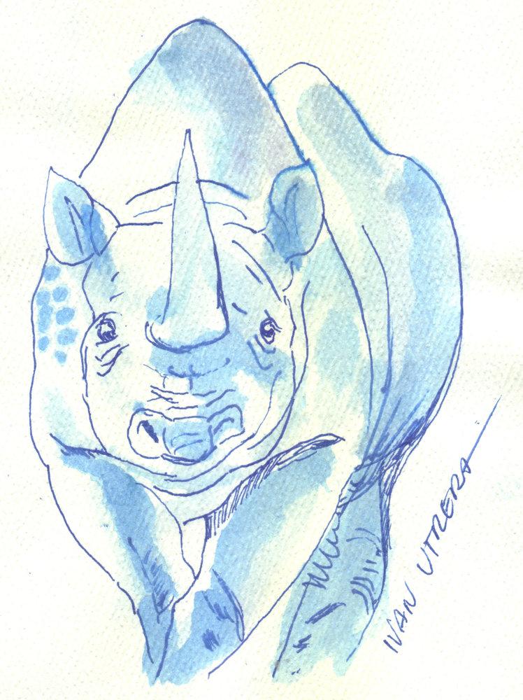 rhino01_322989.jpg