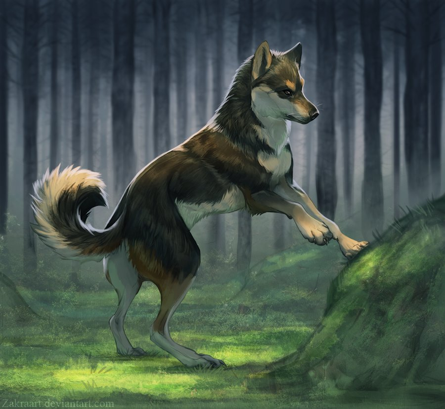 Shiba_at_forest_325392.png