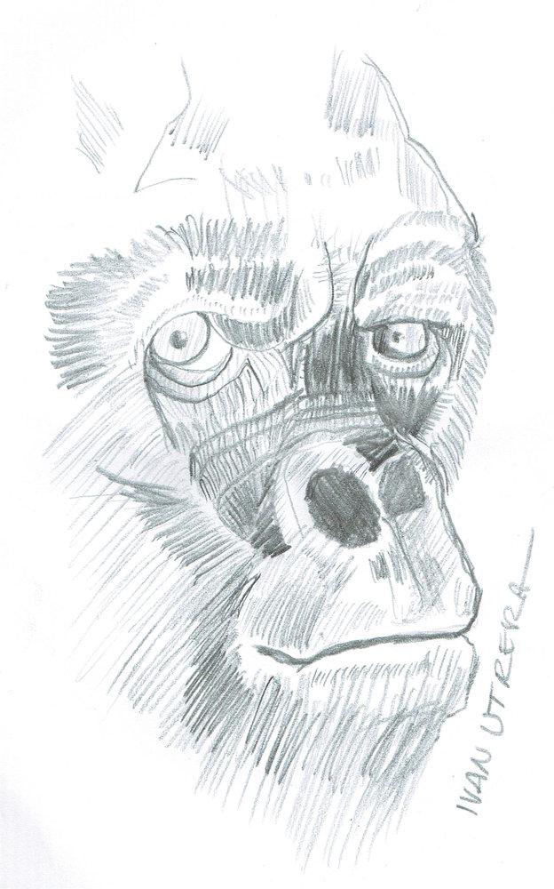 gorilla05_327919.jpg