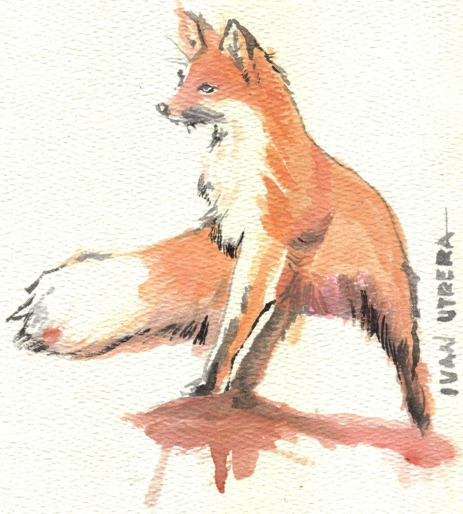 fox04_328375.jpg