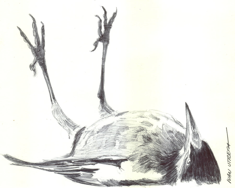 bird01_329833.jpg