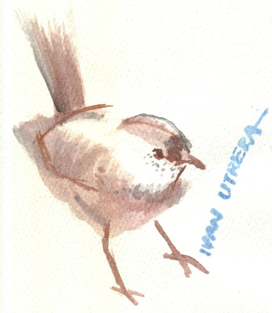 bird02_329934.jpg