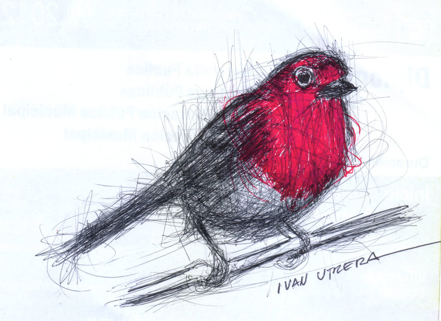 bird06_330058.jpg