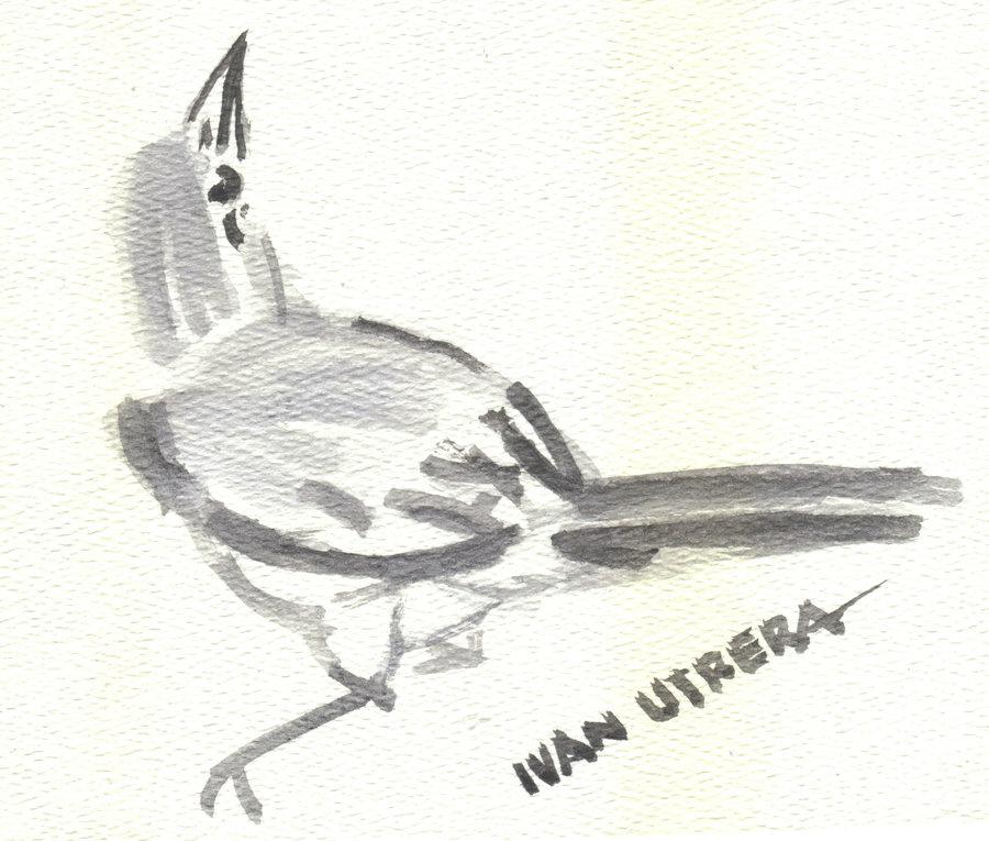 bird07_330164.jpg