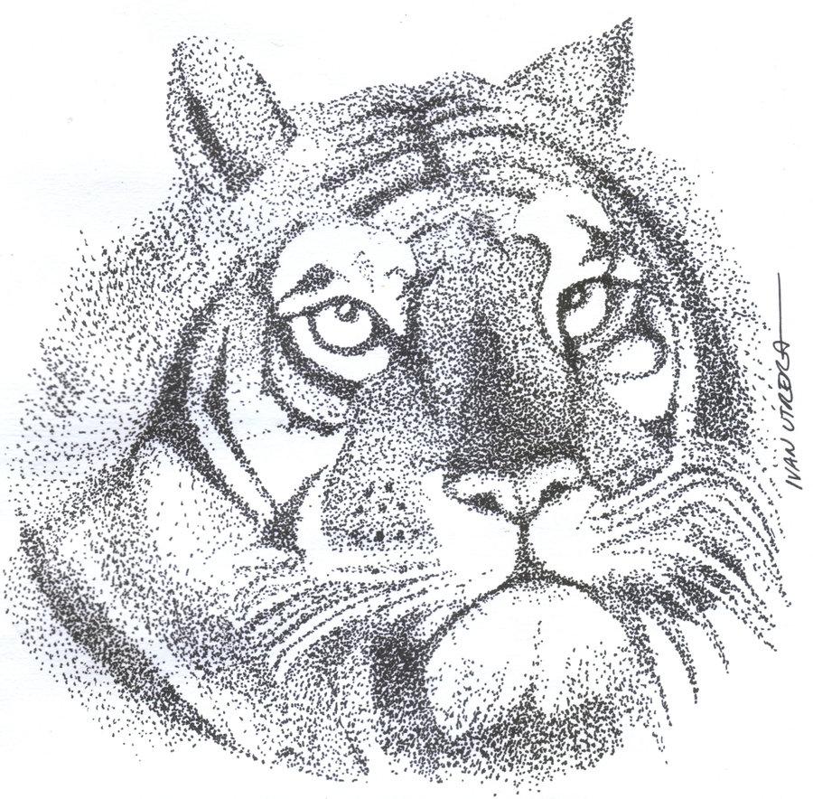 tiger12_330165.jpg