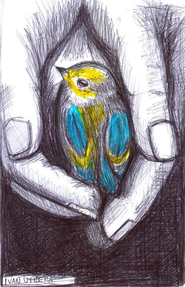 bird16_330591.jpg