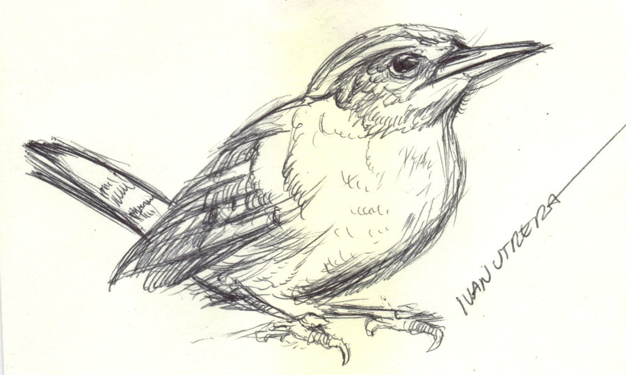 bird18_330689.jpg
