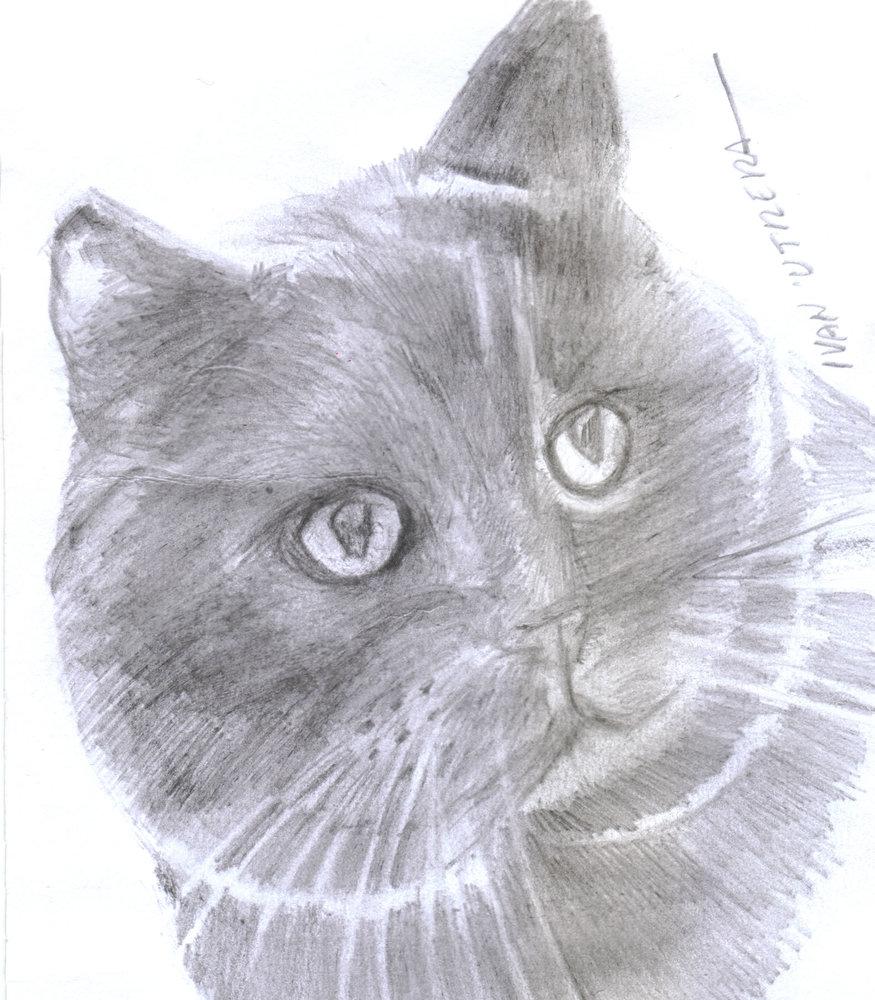 cat04_331671.jpg