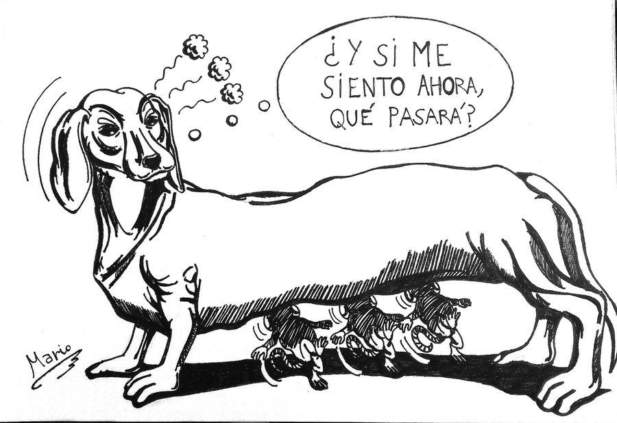 perro_salchicha_333641.jpg