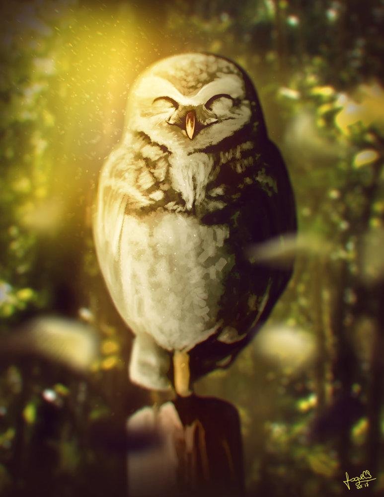 One_leg_Owl_335472.jpg