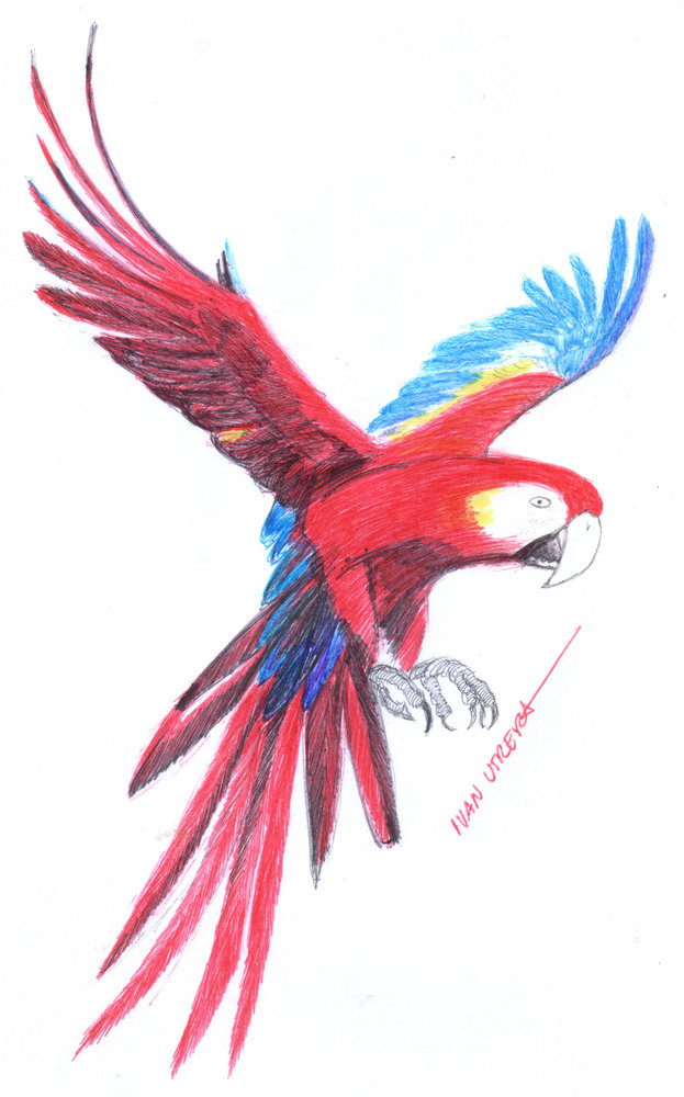 parrot03_335702.jpg