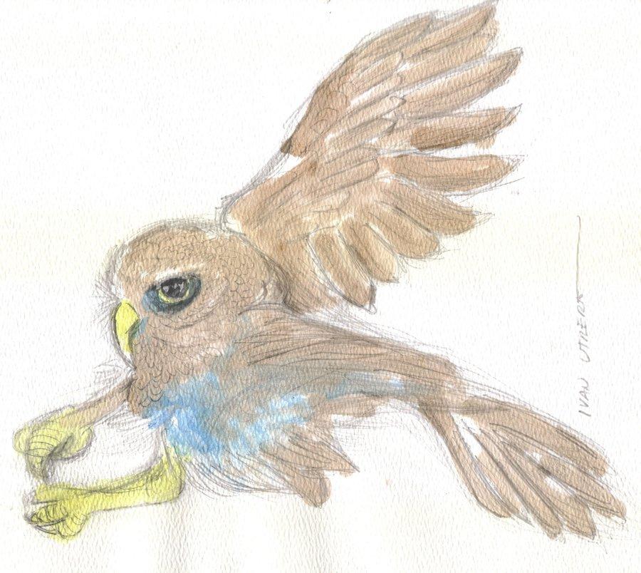 owl06_337019.jpg