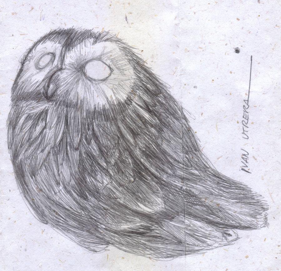 owl_337707.jpg