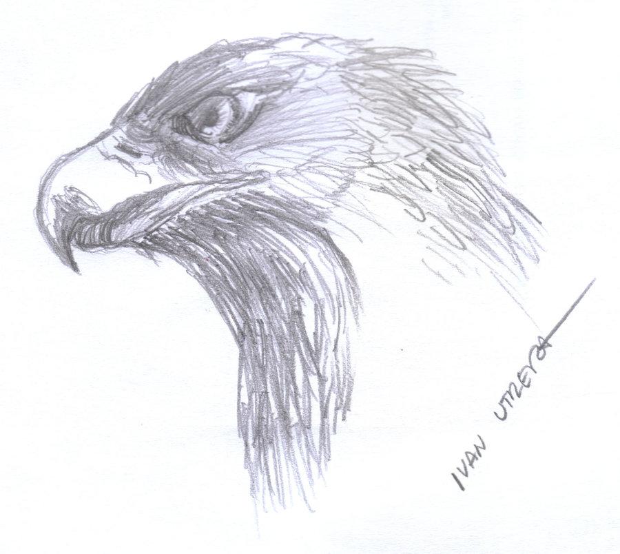 eagle01_338652.jpg