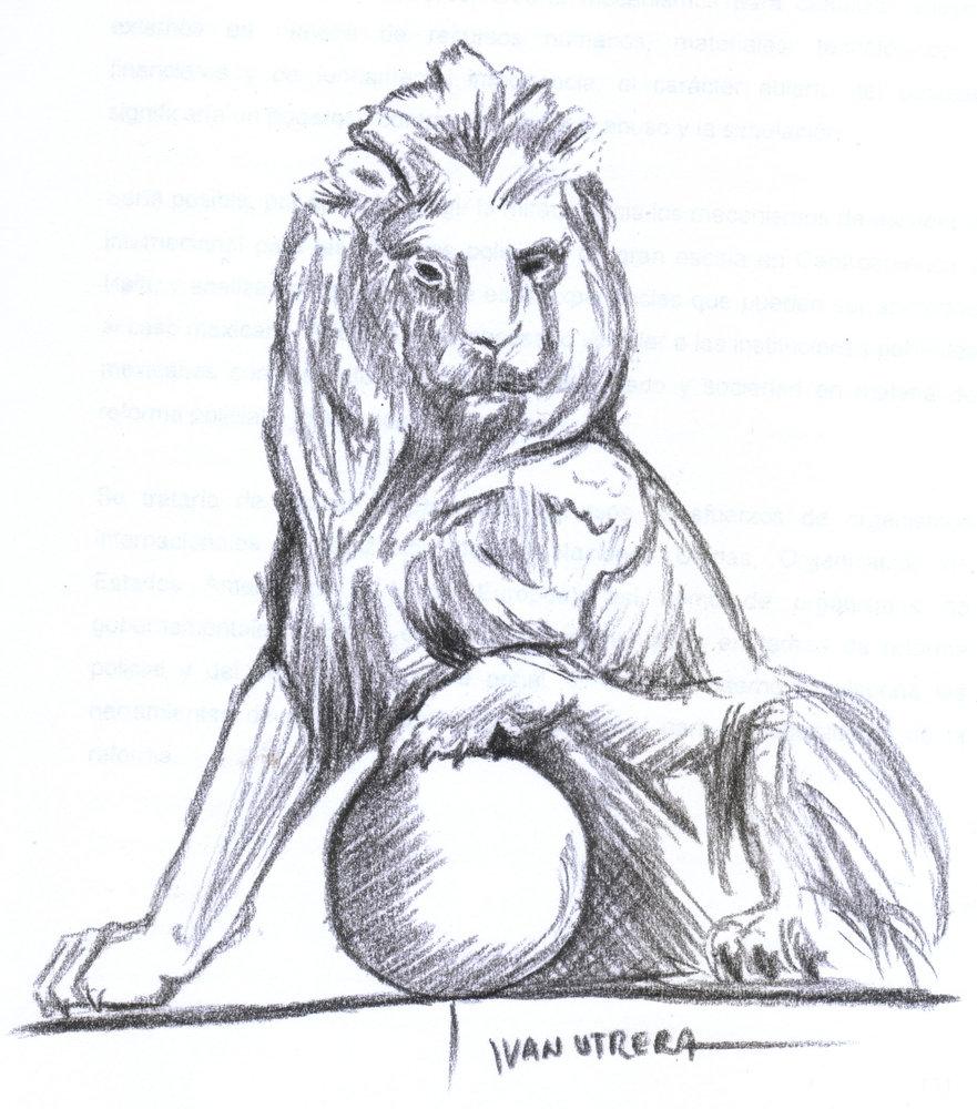 lion08_340156.jpg