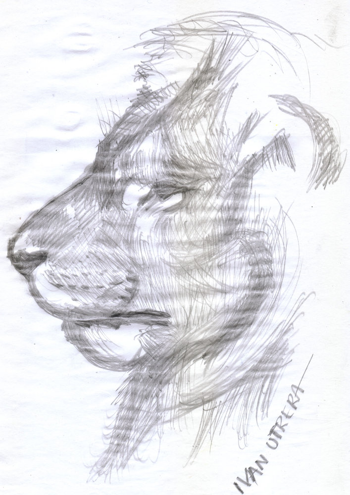 lion03_340553.jpg