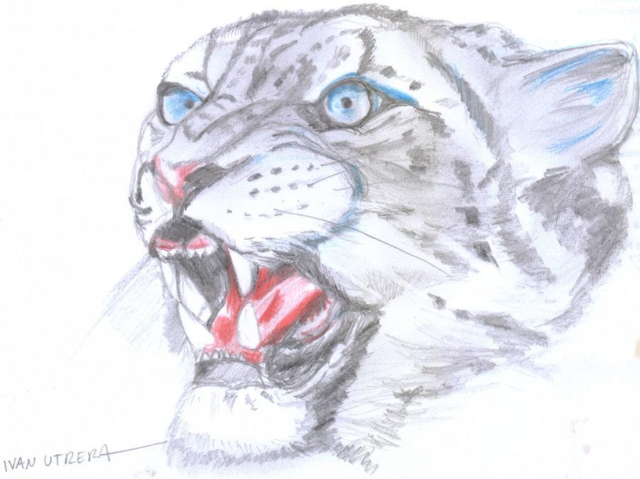 leopardo07_340706.jpg