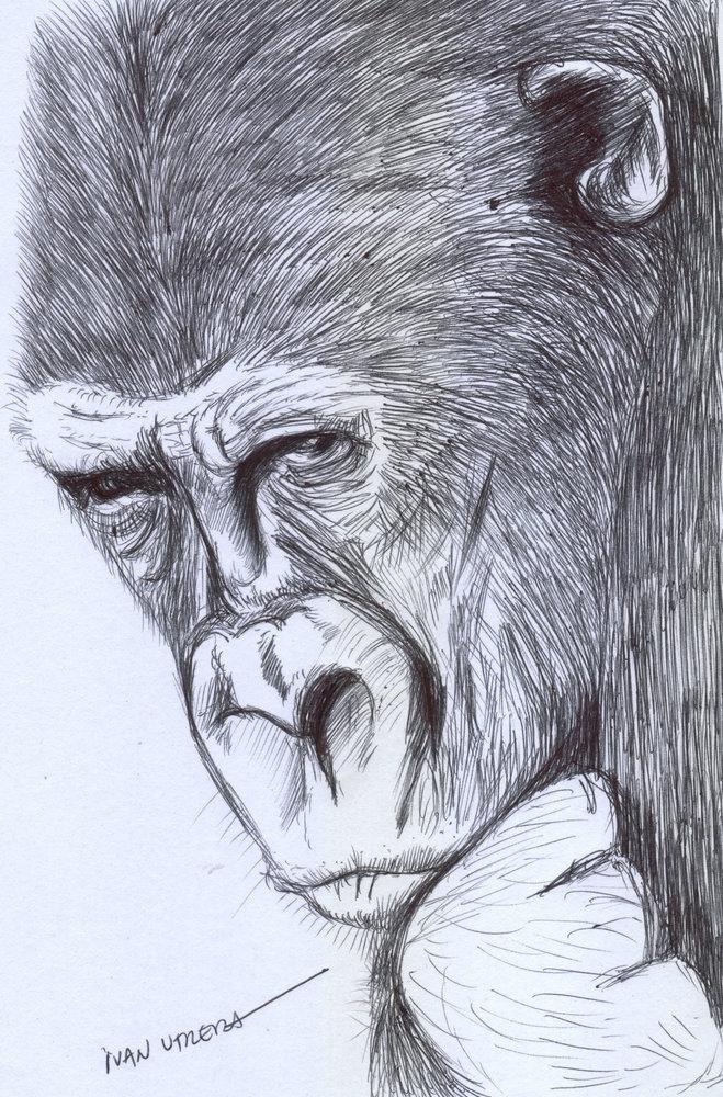gorilla01_340931.jpg