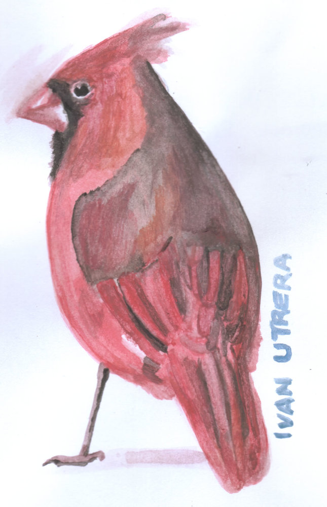 cardenal_307094.jpg