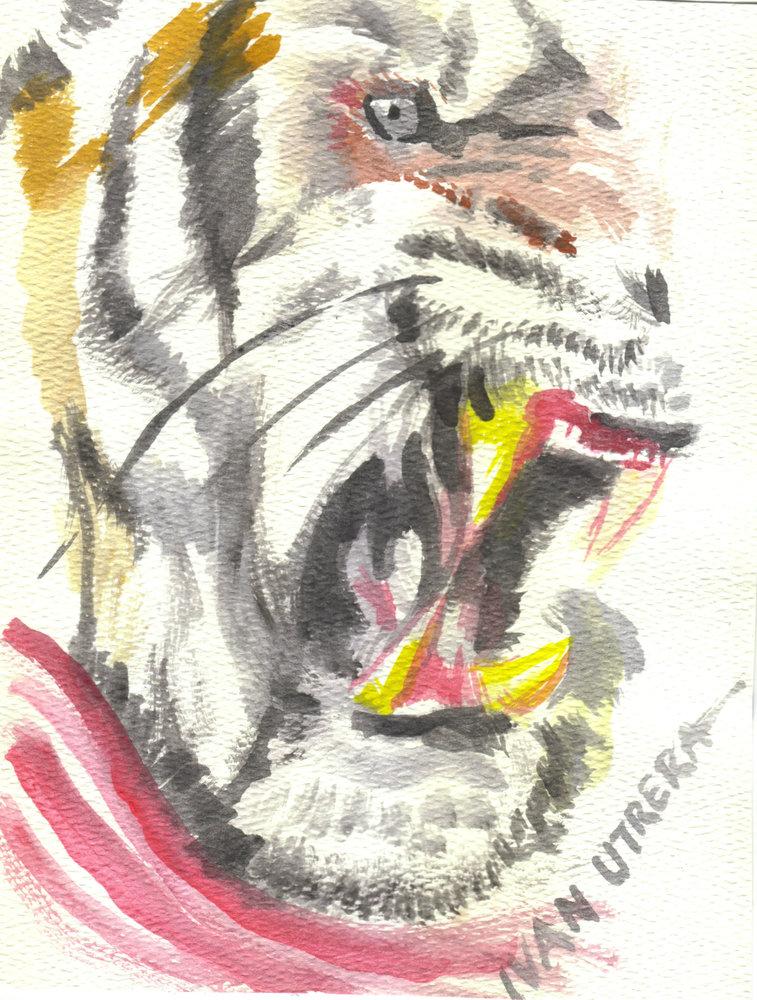 tiger05_307300.jpg