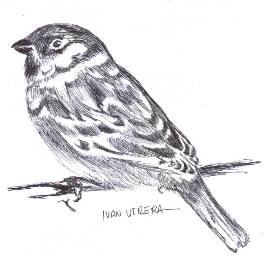bird03_307668.jpg