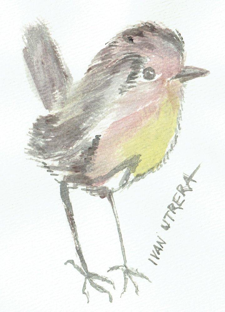 bird07_307681.jpg