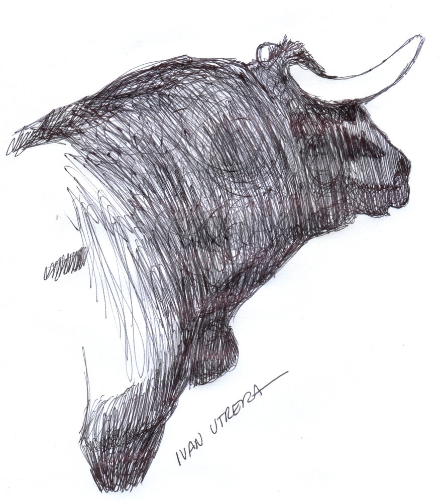 bull3_308022.jpg