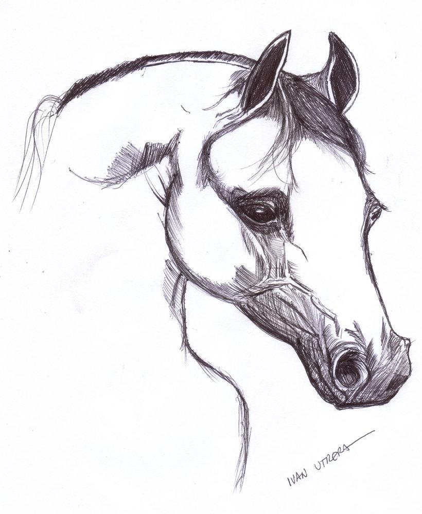 horse03_309502.jpg