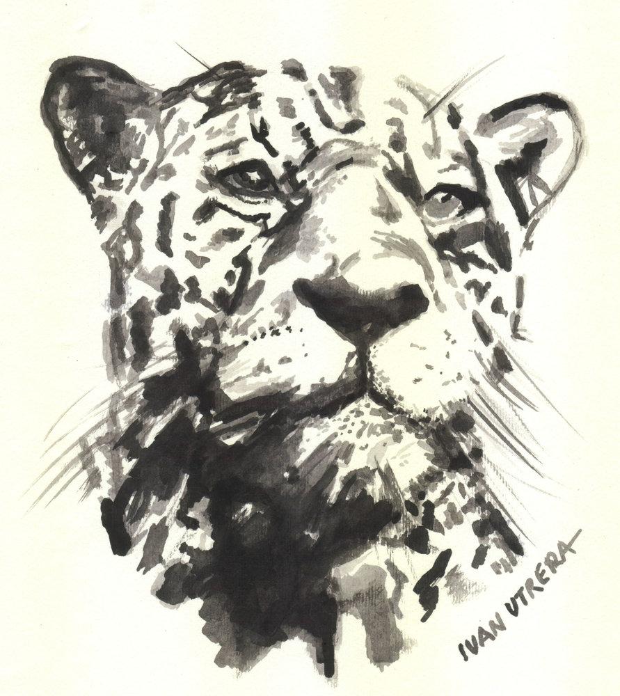 leopardo01_309496.jpg