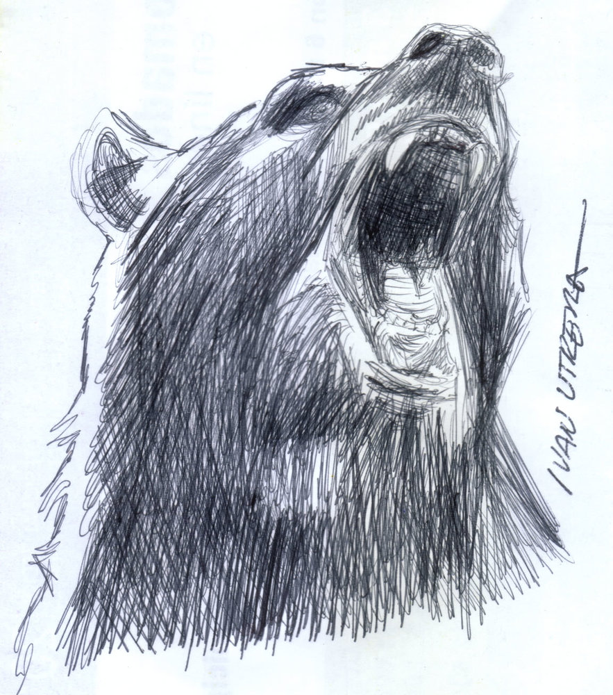 bear_310012.jpg