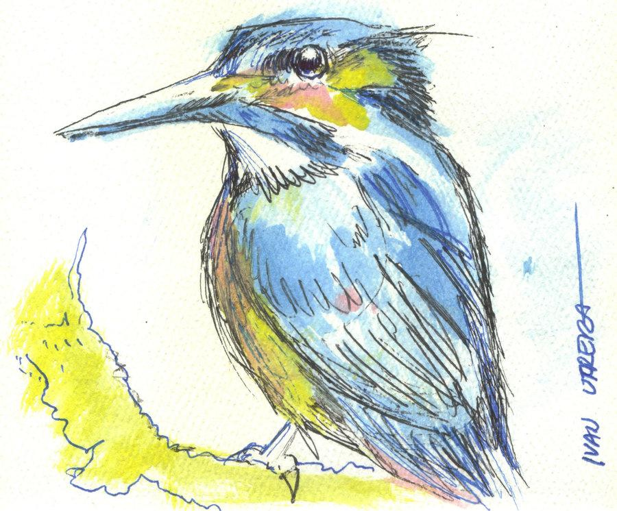 bird15_310023.jpg