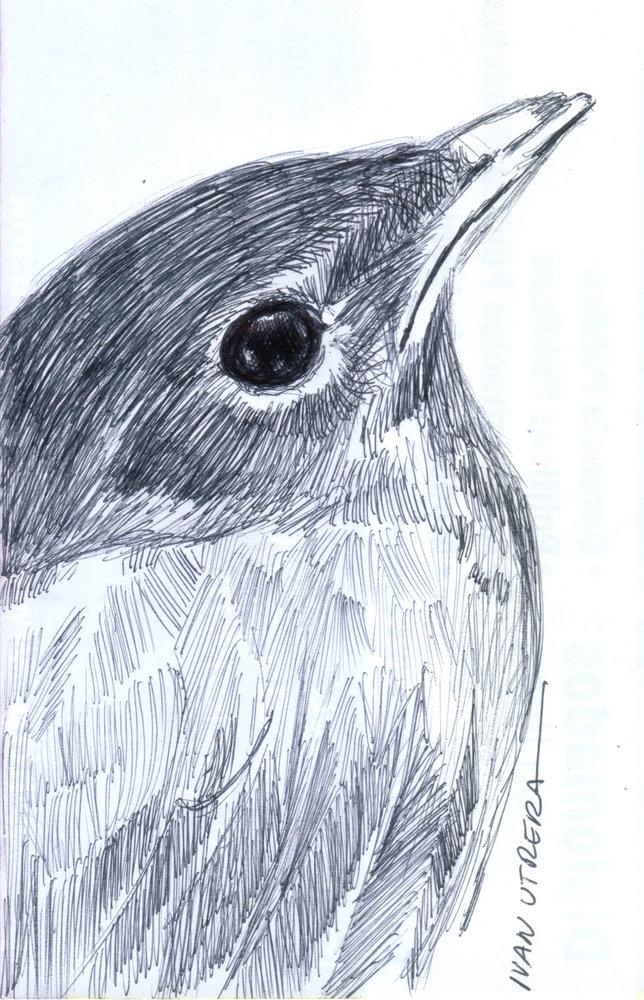bird_310021.jpg