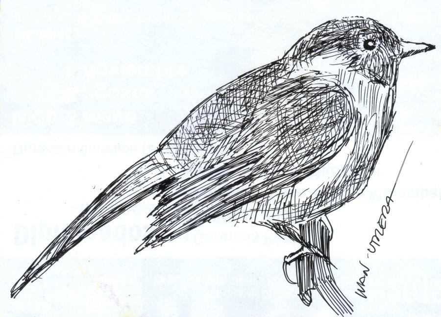 bird03_310462.jpg