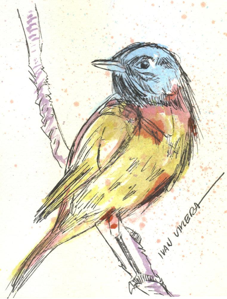 bird14_310625.jpg
