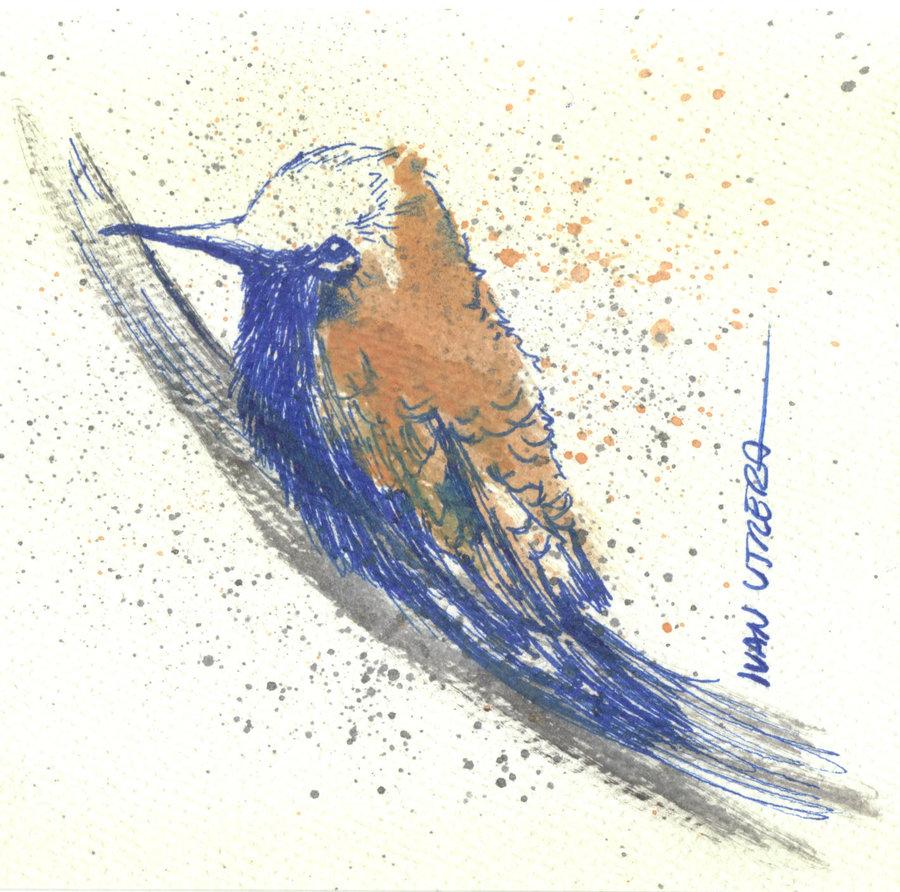 bird16_310639.jpg