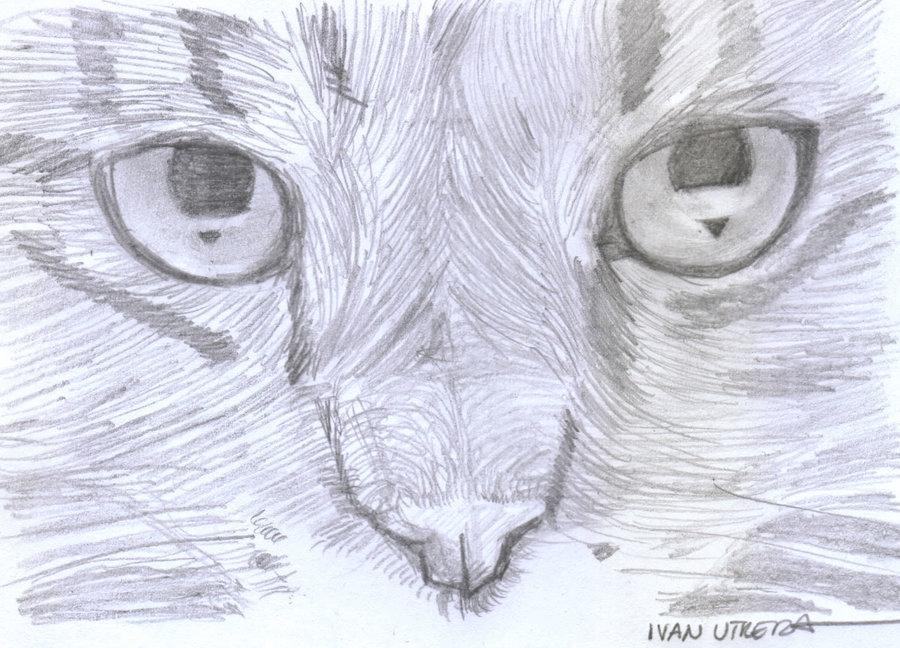 cat04_354769.jpg