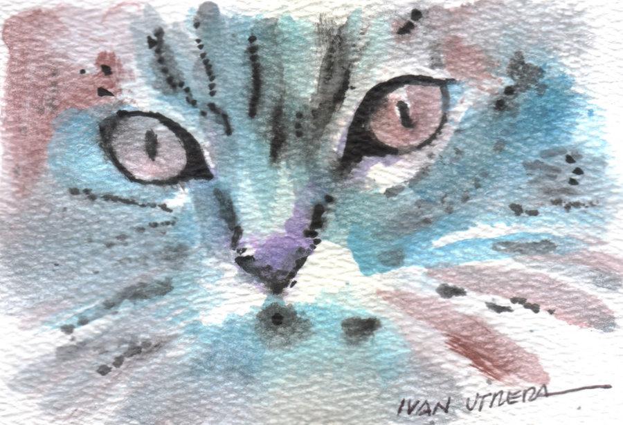 cat07_355172.jpg