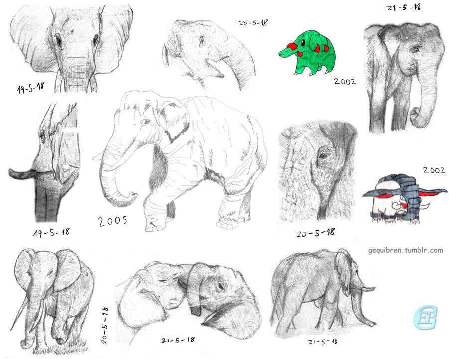Elefantes_357556.jpg