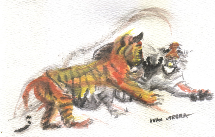 tigers_345272.jpg